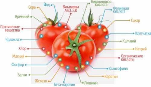 эвенкия на дне помидора
